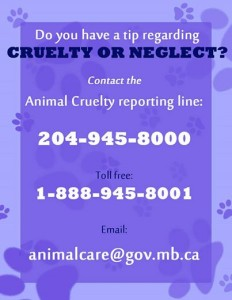 Cruelty Neglect