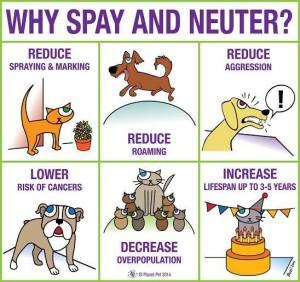 spay neuter 2