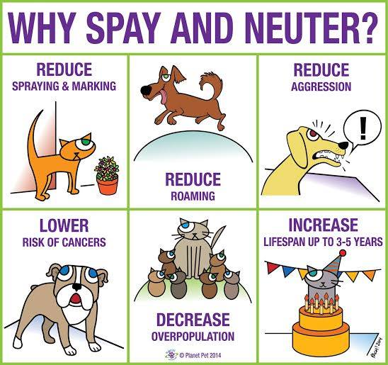spay amp neuter portage animal welfare society inc