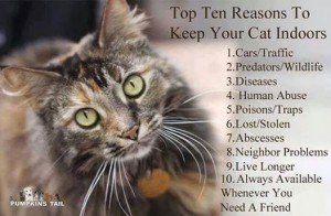 Top 10 Reasons to Keep Your Cat Indoors
