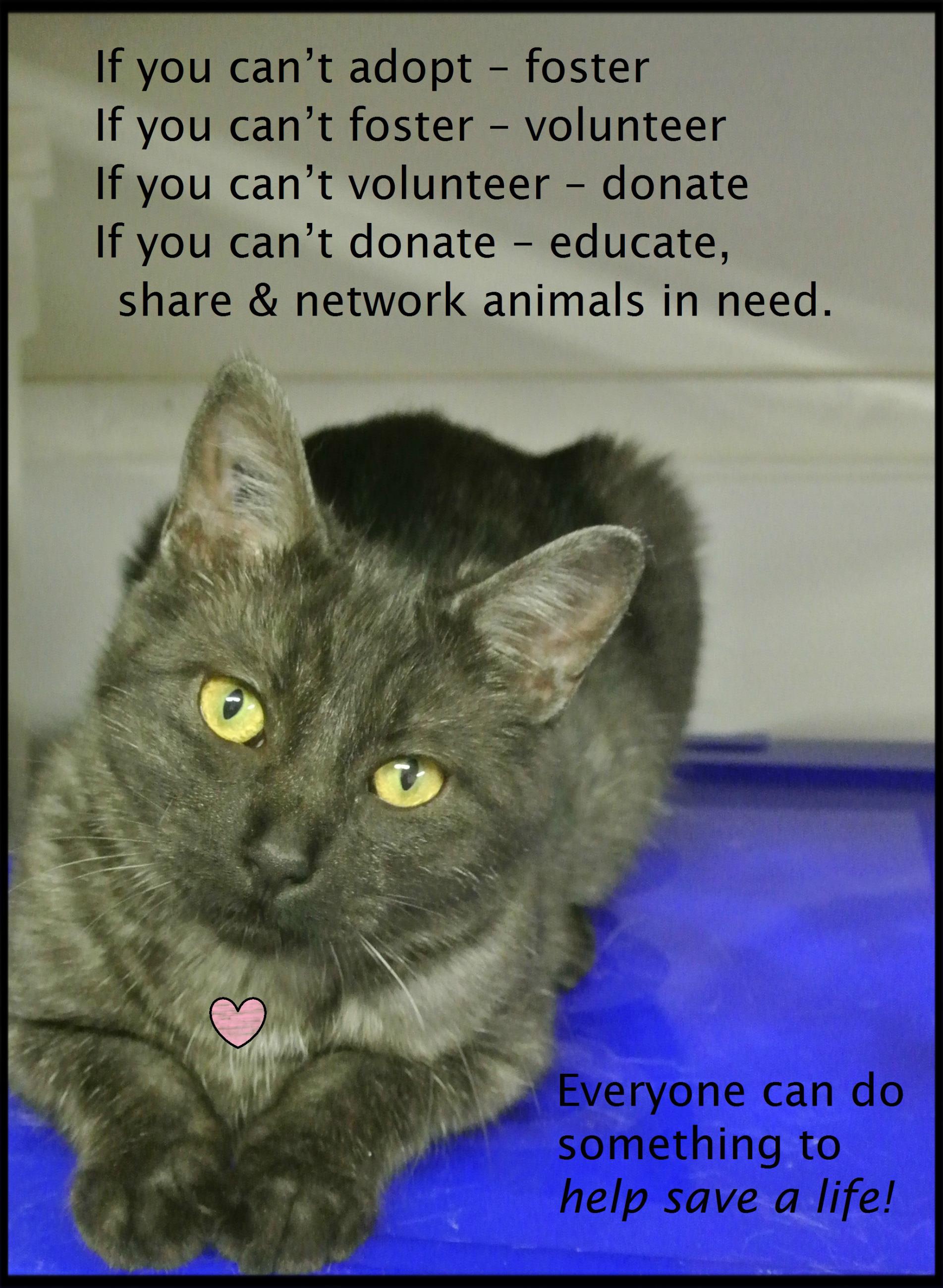 Acknowledgments Portage Animal Welfare Society Inc