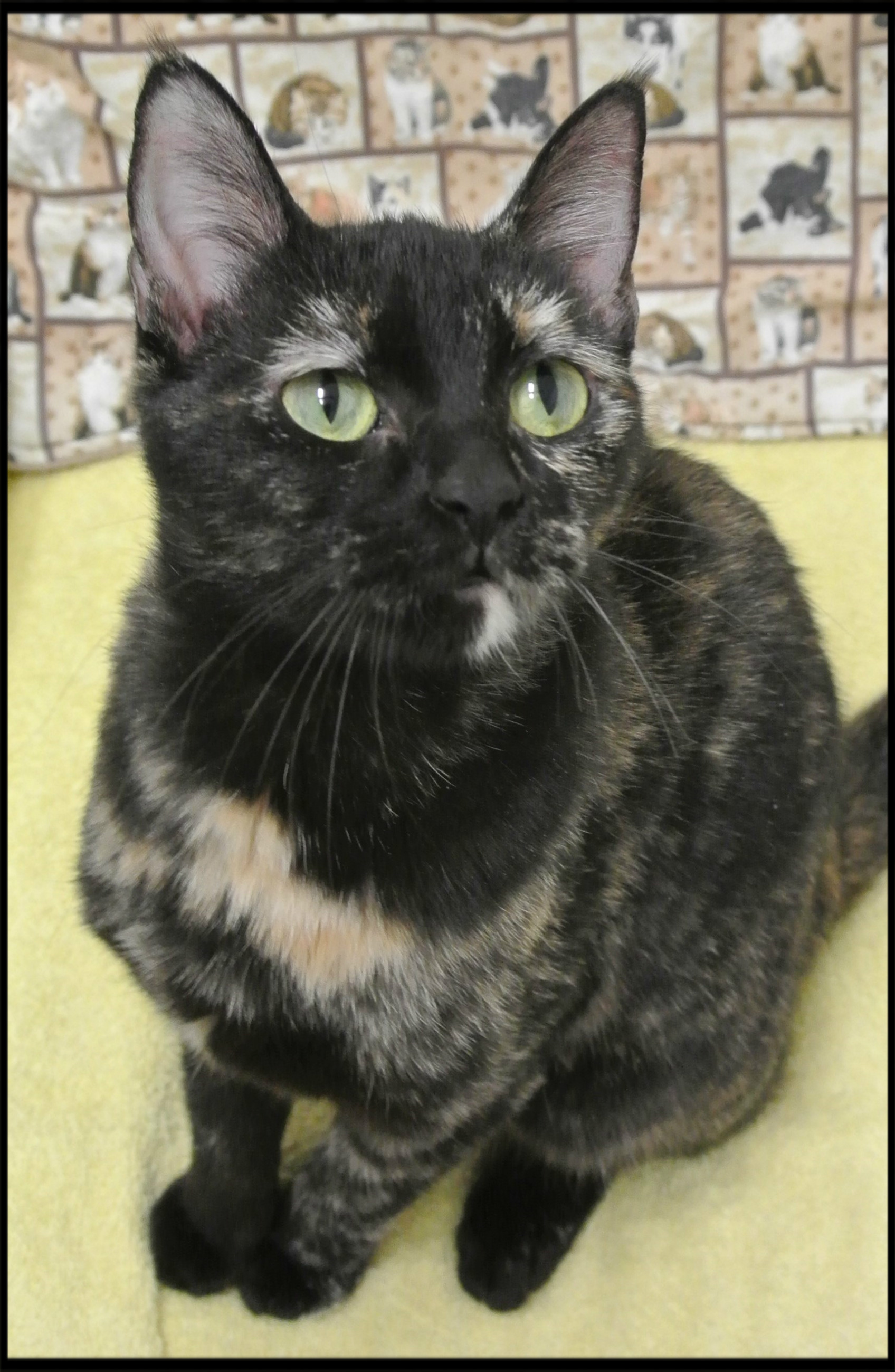 Cat – Portage Animal Welfare Society Inc